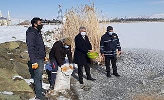 Ulaş Belediye Başkanı İlbey kuşlar için yem bıraktı