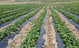 Türk çiftçisi salgın döneminde topraktan kopmadı, üretimi artırdı