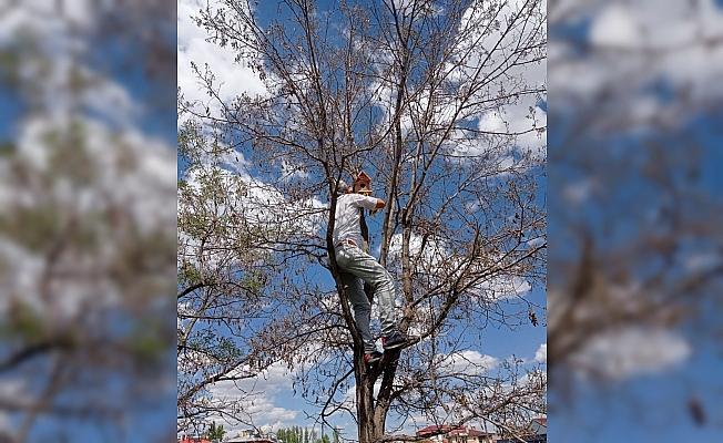 Ulaş'ta lise öğrencilerinin yaptığı kuş yuvaları okul bahçesindeki ağaçlara asıldı
