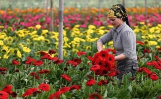 Türkiye'nin tarım ihracatı bu yıl aylık bazda 2 milyar doların altına düşmedi