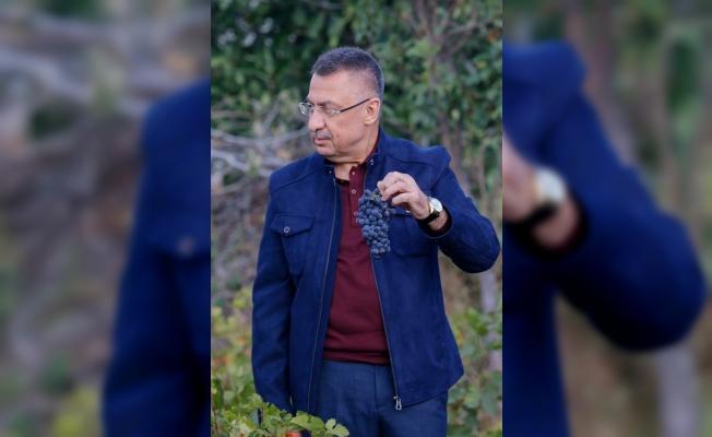 Cumhurbaşkanı Yardımcısı Oktay, memleketi Çekerek'te üzüm hasadına katıldı