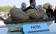 Niğde'de yerli patates hasadı