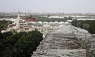 Antalya'da bin dönümün üzerinde serada hasar var