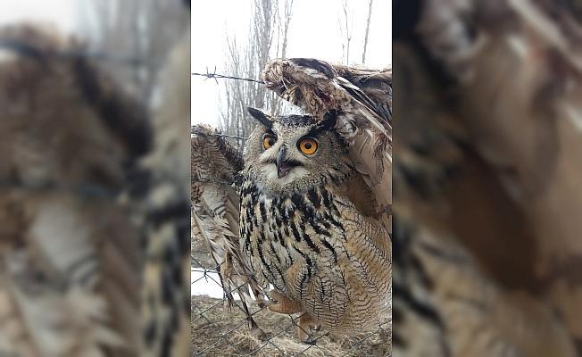 Dikenli tele takılan kuşu itfaiye kurtardı