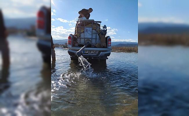 Beyşehir Gölü'ne binlerce yavru sazan balığı bırakıldı