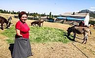 Kanser hastası eşine eşek sütü elde etmek için çiftlik kurdu