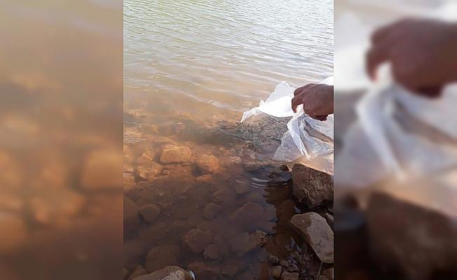 Konya'da göl ve göletlere 206 bin yavru sazan bırakıldı