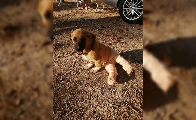 Yaralı yavru köpeğe belediye sahip çıktı