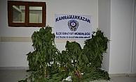 Kahramankazan'da uyuşturucu operasyonu