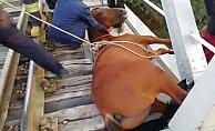 Raylara sıkışan atı itfaiye kurtardı