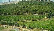 Atatürk Orman Çiftliği'ne 2,1 milyon fidan