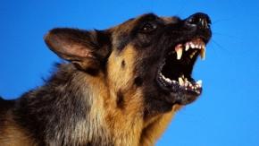 Çankaya'da Sokak Köpekleri İnsanlara Saldırıyor!