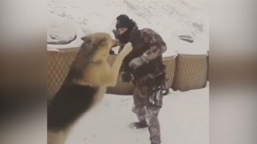 Özel harekatın kurtla güreşmesi sosyal medyayı salladı!